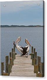 Pelicans On A Timber Landing Pier Mooring Acrylic Print by Ulrich Schade