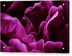 Peony Petals Acrylic Print by Scott Hovind