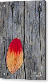Petal On Wood Acrylic Print by Sean Griffin