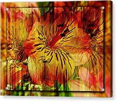 Petal Paradigm Acrylic Print by Tim Allen