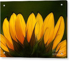 Petales De Soleil - A12 Acrylic Print by Variance Collections