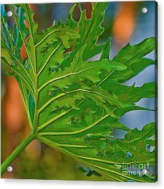 Philodendron Acrylic Print by Herb Paynter