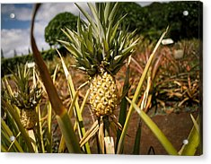 Pineapple Acrylic Print by Mathew Hasegawa