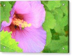 Pink Althea Acrylic Print by Wide Awake Arts