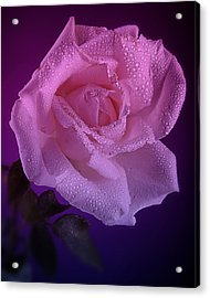 Pink And Blue Rose In The Rain Acrylic Print by M K  Miller