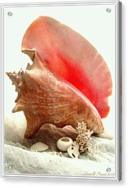 Pink Cong Shell Acrylic Print by Danielle  Parent