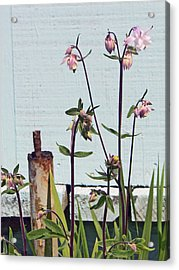 Pink Doves Acrylic Print by Pamela Patch