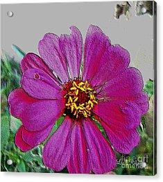 Pink Flower Acrylic Print by Lisa  Ridgeway