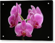Pink March Madness Acrylic Print by Juergen Roth