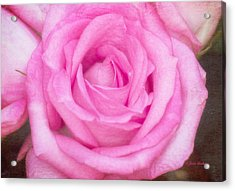Pink Surprise Acrylic Print by Joan Bertucci