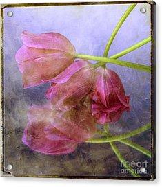 Pink Tulips Acrylic Print by Bernard Jaubert