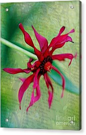Pinwheel Acrylic Print by Judi Bagwell