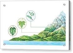 Plant Communities, Artwork Acrylic Print by Gary Hincks