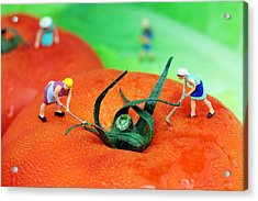 Planting On Tomato Field Acrylic Print by Paul Ge