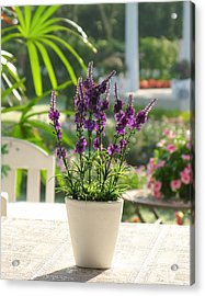 Plastic Lavender Flowers  Acrylic Print by Nawarat Namphon