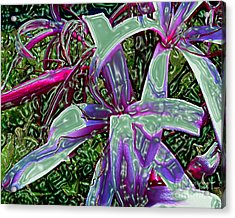Plasticized Cape Lily Digital Art Acrylic Print by Merton Allen