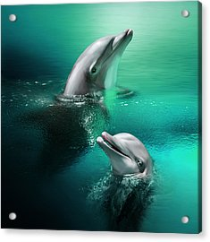 Playful Dolphins Acrylic Print by Julie L Hoddinott