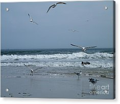 Playful Gulls Acrylic Print by Laurence Oliver