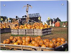 Plenty Of Pumpkins Acrylic Print by Sally Weigand