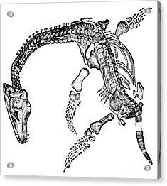 Plesiosaurus Acrylic Print by Science Source
