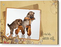 Pomeranian 1 Acrylic Print by Everet Regal