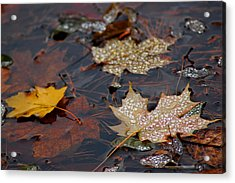 Pond Leaf Dew Drops Acrylic Print by LeeAnn McLaneGoetz McLaneGoetzStudioLLCcom