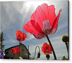 Poppies And Sky Acrylic Print by Robert Meyers-Lussier