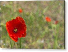 Poppies At Spring (close-up) Acrylic Print by Sami Sarkis