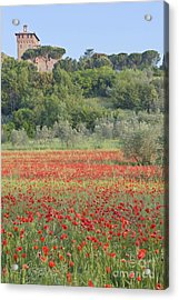 Poppy Field Acrylic Print by Rob Tilley