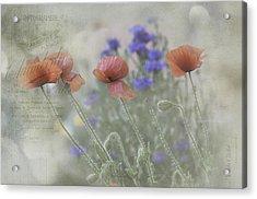Poppy Photo Acrylic Print by Carolyn Dalessandro