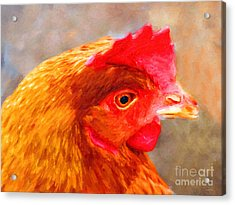 Portrait Of A Chicken Acrylic Print by Wingsdomain Art and Photography