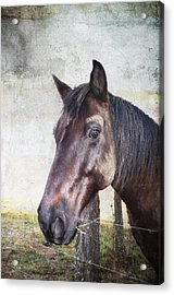 Portrait Of A Horse Series V Acrylic Print by Kathy Jennings