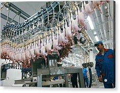 Poultry Factory Production Line Acrylic Print by Ria Novosti