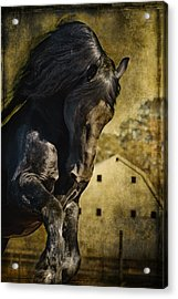 Power House Horse D1496 Acrylic Print by Wes and Dotty Weber