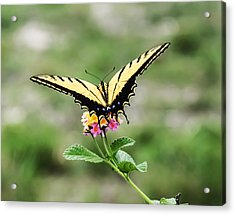 Prepare For Take Off Acrylic Print by Kelly Rader