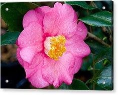 Pretty In Pink 2 Acrylic Print by Rich Franco