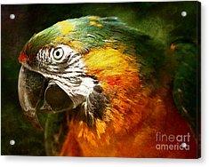 Pretty Polly Acrylic Print by Lee-Anne Rafferty-Evans