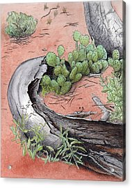 Prickly Pear Cacti In Zion Acrylic Print by Inger Hutton