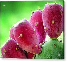 Prickly Pear Acrylic Print by Diane Wood