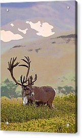 Profile Of A Bull Caribou- Abstract Acrylic Print by Tim Grams