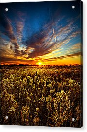 Proposal Acrylic Print by Phil Koch