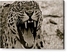 Protecting The Young Acrylic Print by Eric Chapman