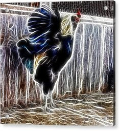 Proud Rooster Acrylic Print by Kami McKeon