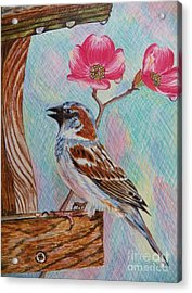 Ptg   Sparrow With Pink Dogwood In The Rain Acrylic Print by Judy Via-Wolff
