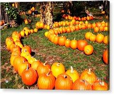 Pumpkin Patch Path Acrylic Print by Carol Groenen
