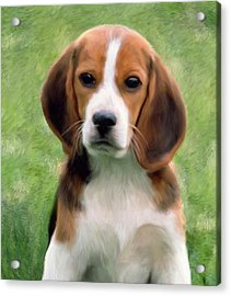 Puppy Portrait Acrylic Print by Snake Jagger