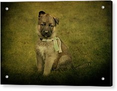 Puppy Sitting Acrylic Print by Sandy Keeton
