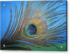 Purdy As A Peacock Acrylic Print by Kathy Clark
