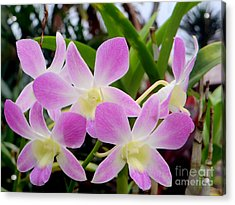 Purple Balinese Flower Acrylic Print by Samantha Mills
