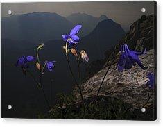 Purple Flames Acrylic Print by Fernando Alvarez